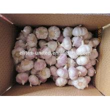 Alta qualidade e melhor preço alho fresco