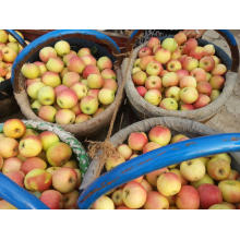 2015 New Crop Gala Apple