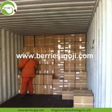 Wholesale Super Food Improve Eyesight Malaysia Goji Berry