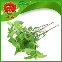 Feuilles de menthe naturelles, légumes minces