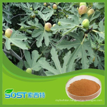 2015 herbal medicine best selling products high quality free sample fig leaf extract