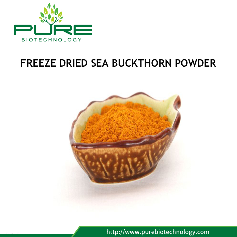 Freeze Dried Sea Buckthorn Powder