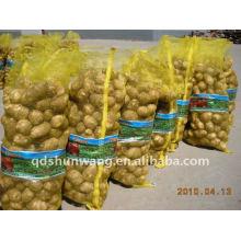 Norme chinoise de taro japan frais