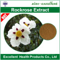 Cistus creticus extract Cistus ladanifer