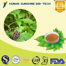 Sibirischer Ginseng-Extrakt Acanthopanax senticosus 1% Eleutherosides Pulver