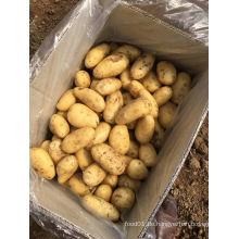 Heißer Verkauf 2016 neue Ernte-frische Kartoffel