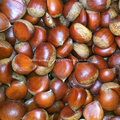 Wholesale Price fresh chestnut with good quality