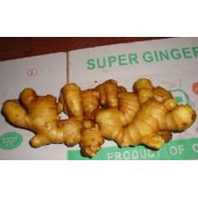 chinese fersh ginger