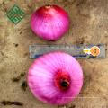 oignons frais en vrac de Chine