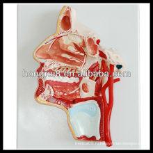 ISO 3-D анатомическая модель головы и лица человека