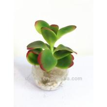 Hermosa mini planta de bonsai artificial con maceta de vidrio para decoración