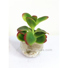 Beautiful mini artificial bonsai plant with glass pot for decor