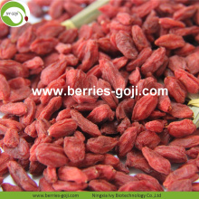 Fábrica al por mayor Super Food Nutrition Ningxia Goji