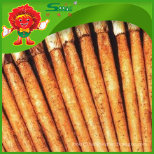 Yunnan Origin Fresh Burdock Root