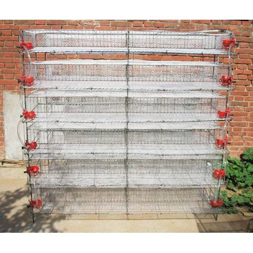 Quail broiler cage  feeding system