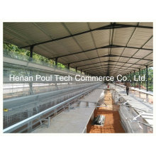 Poul Tech Automatic Layer Cage System (A Type)