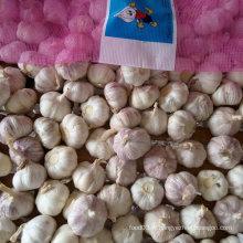 Ail blanc fraîche chinois en sac en maille 10kg