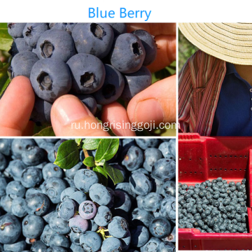 Nature+Blueberry+Dried+Fruit