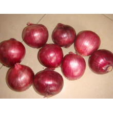 Fresh New Crop Export Gute Qualität Rote Zwiebel