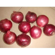 Nouvelle récolte fraîche d'exportation Bonne qualité oignon rouge