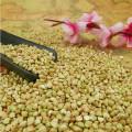 ALIBABA USED EXCLUSIVELYSweet Buckwheat (GF3)