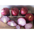 Chinese fresh red onion