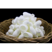 High Quality Beauty Silk Cocoons Natural Mulberry Silk Cocoons Ball