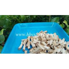 Processus de séchage des annonces Granules de tiges de champignons Shiitake déshydratés