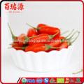 2016 горячая распродажа сушеные ягоды годжи высокого качества