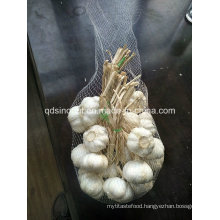 Chinese Garlic in Bundle