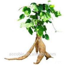Polvo de extracto de raíz de Kudzu orgánico 100% natural de alta calidad 100% natural a granel