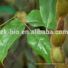 Mucuna Pruriens Extract Levodopa