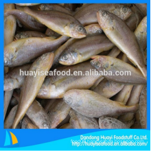 fresh frozen baby yellow croaker fish for sale with superior service