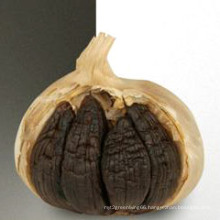 Professional Top Quality Black Garlic Export