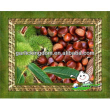 China fresh chestnut