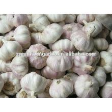 China nueva exportación de ajo rojo fresco