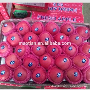 Fuji apple exporter in china