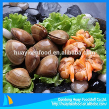 hot sale frozen surf clam with good quality