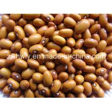 Brown Kidney Beans