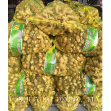 Good Quality Fresh Ginger Mesh Bag 150g and up