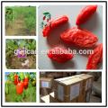 china secado níspero / exportador chino wolfberry / secado bayas de goji
