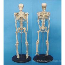 Modelo de anatomia médica do esqueleto do corpo humano 120cm