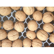 Shell walnuts on a natural walnut farm