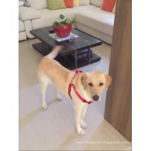 Durable wholesale metal chain dog harness