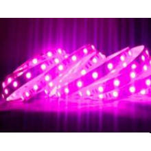 660nm rosa cor tira de luz LED 5050 60LEDs / M