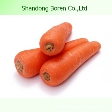 2015 Organic Fresh Vegetable Carrot