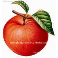 Frischer China-Apfel Pome