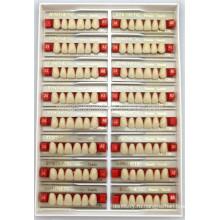 Производитель 2-слойных зубьев для верхней передней упаковки