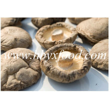 La meilleure qualité Agricole Food Smooth Shiitake Mushroom