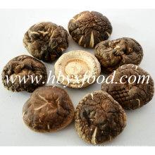 5,5 cm de fleurs de thé séchées parfumées Shiitake Mushroom